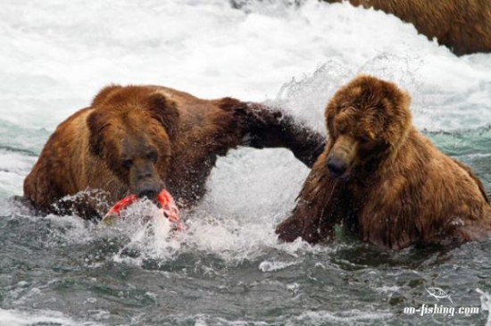 bear-fishing