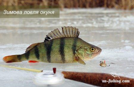 Зимова ловля окуня