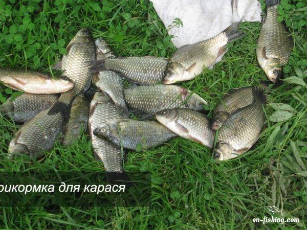 эффективная прикормка для рыбы своими руками