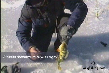Зимова рибалка на окуня і щуку