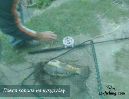Відео короп на кукурудзу