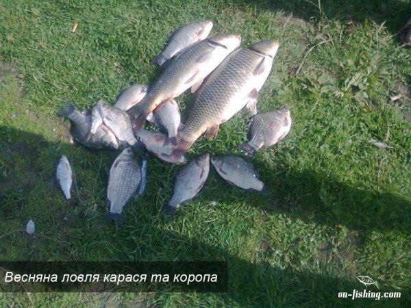 когда клюет рыба на озере