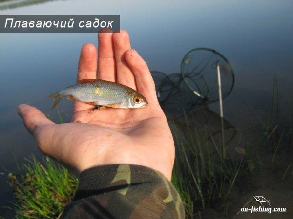 путанку як риболовну 3робити